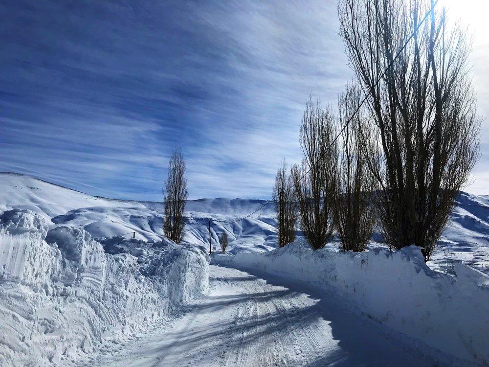 Cedars / Bsharri - January 2019