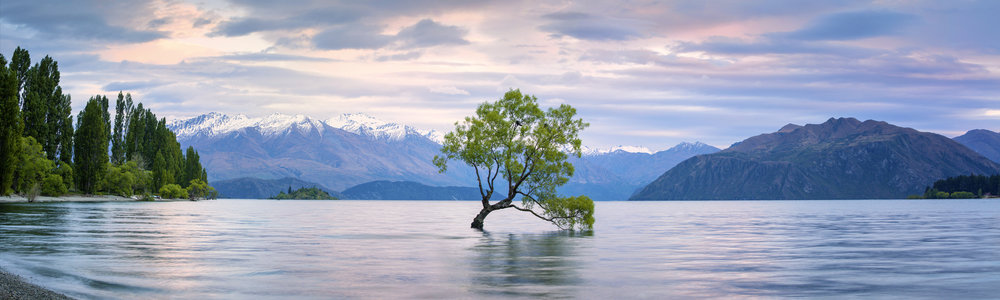 Photo by MollyBrownNZ/iStock / Getty Images