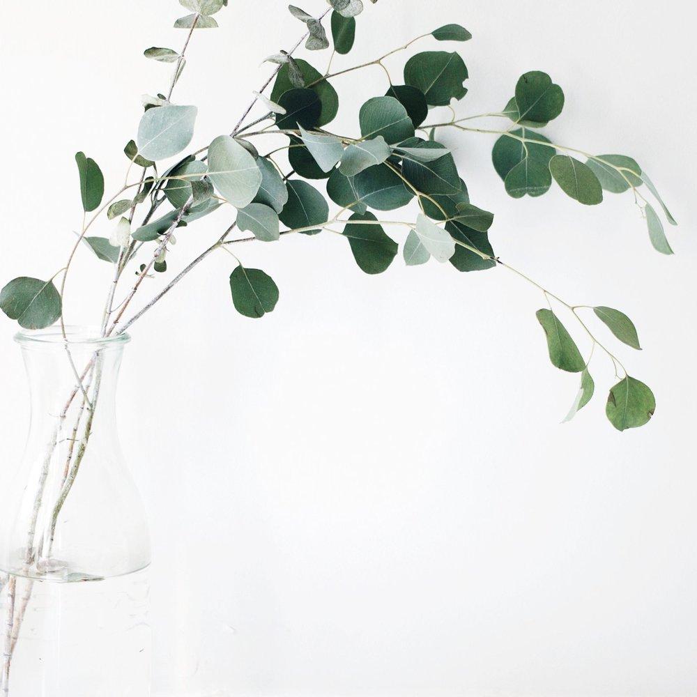 vancouverplants.jpg