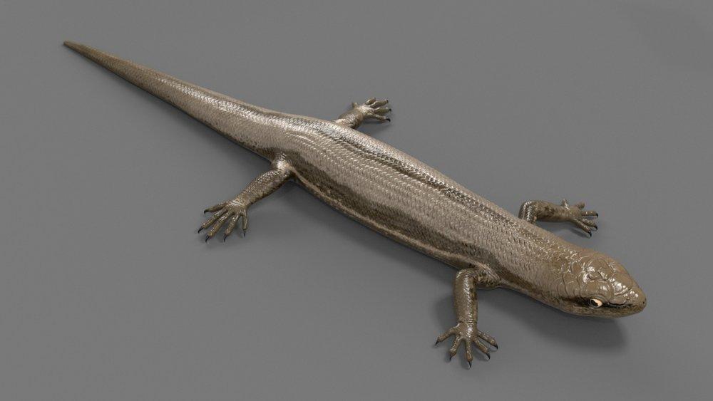 lizard_model_v005.jpg