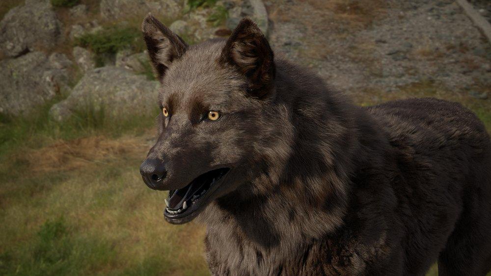 Wolf_3d_model_v024_033_011.jpg
