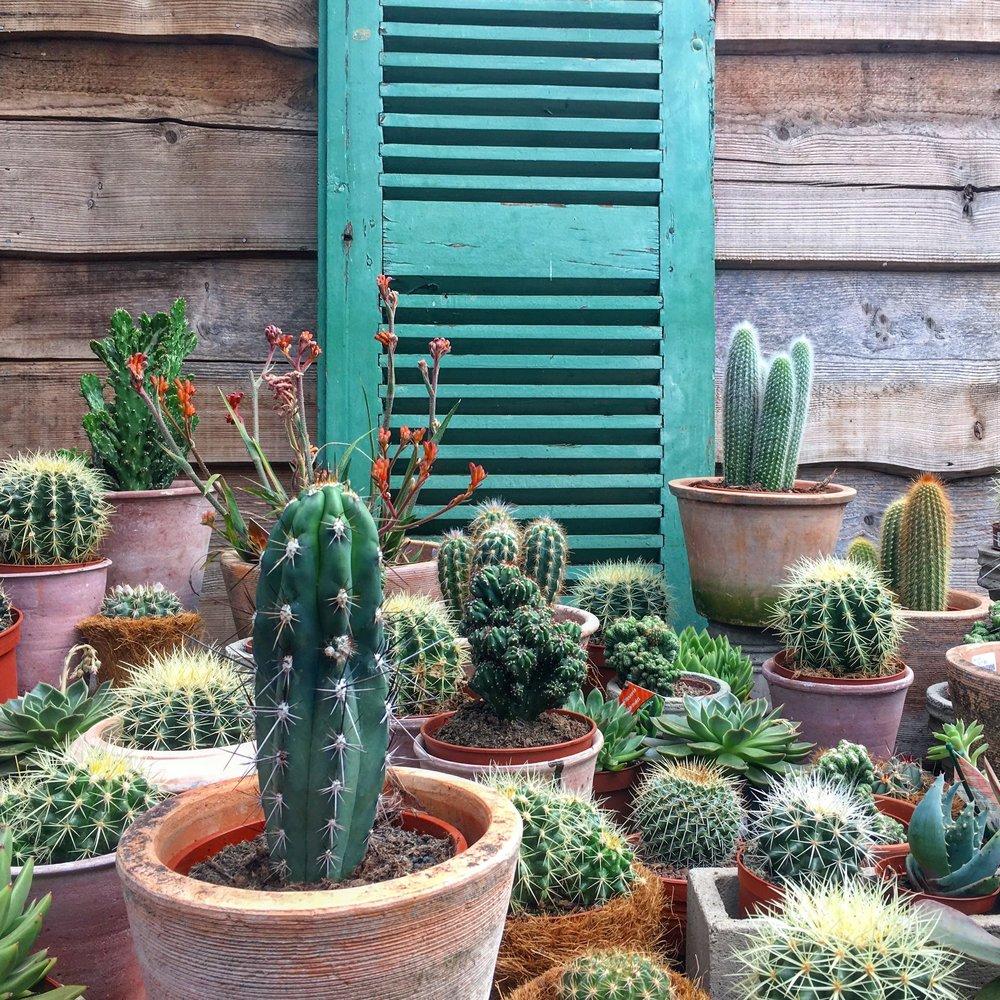 Petersham-Nurseries-Covent-Garden-Plants-Flowers-Queensmith-Loves-Hatton-Garden-Jewellers