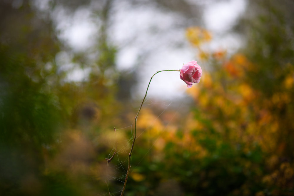 Ida_Hollis_Photography_Nature003.jpg