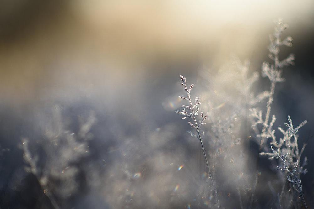Ida_Hollis_Photography_Nature070.jpg
