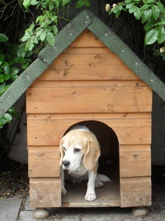 Buffy in the Dog House