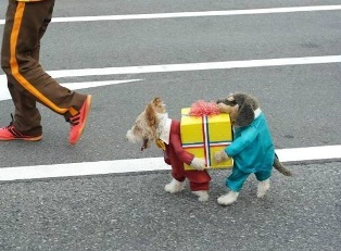 Two dogs carrying a box