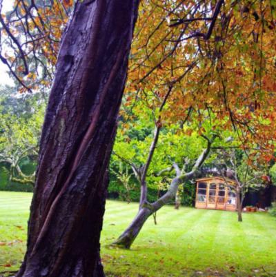 pooh corner kitlands autumn.png