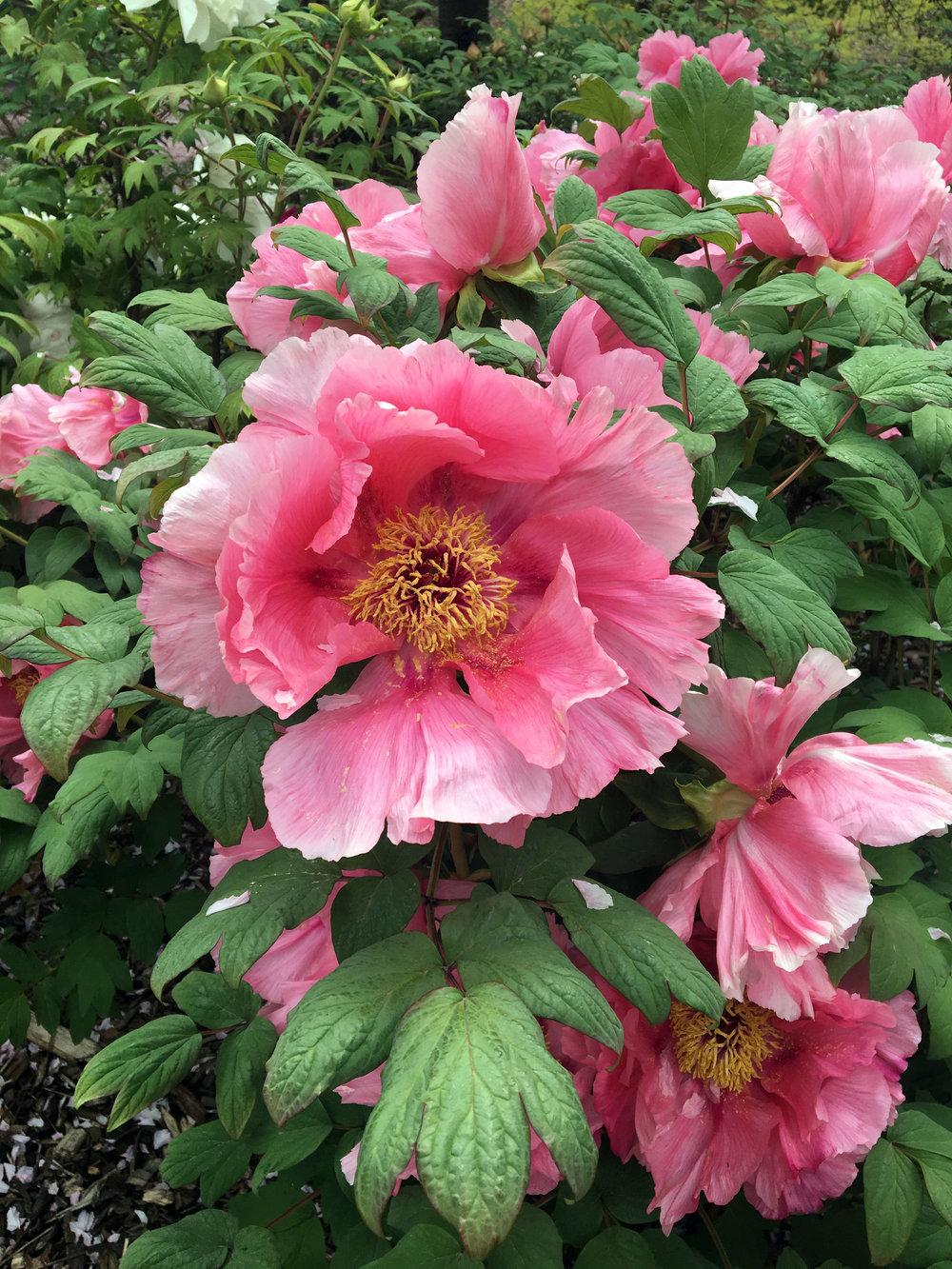 botanic gardens 1.jpg
