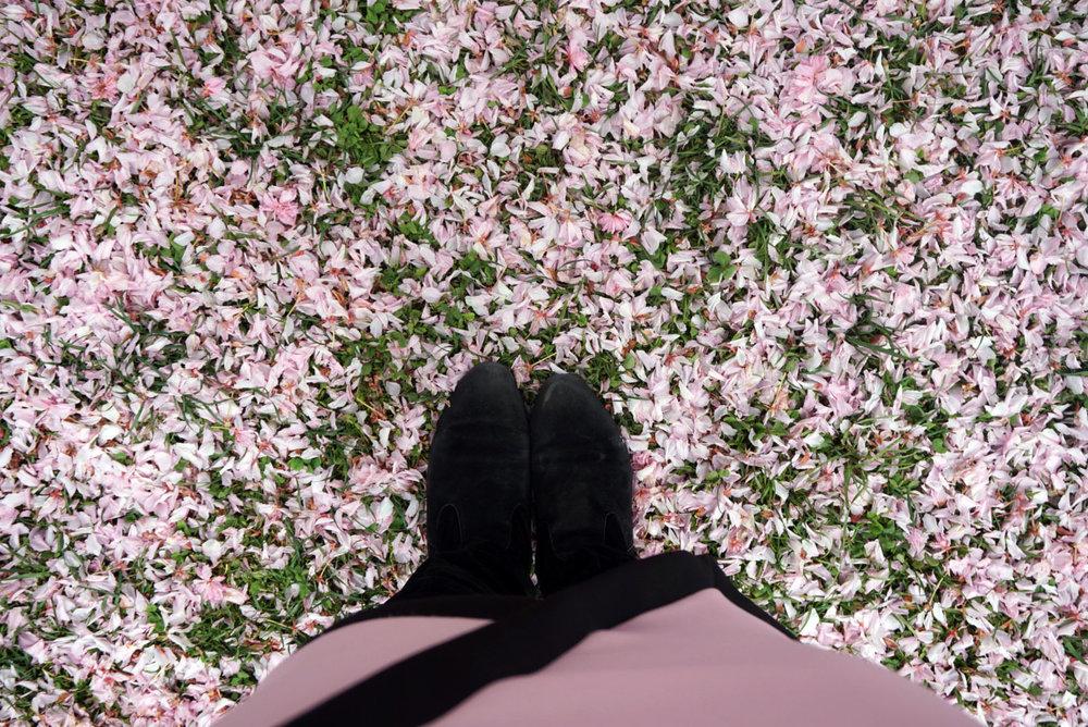 botanic gardens 10.jpg