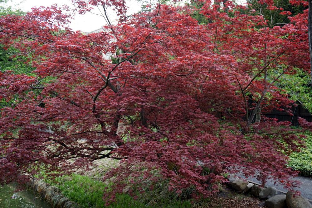 botanic gardenss 12.jpg