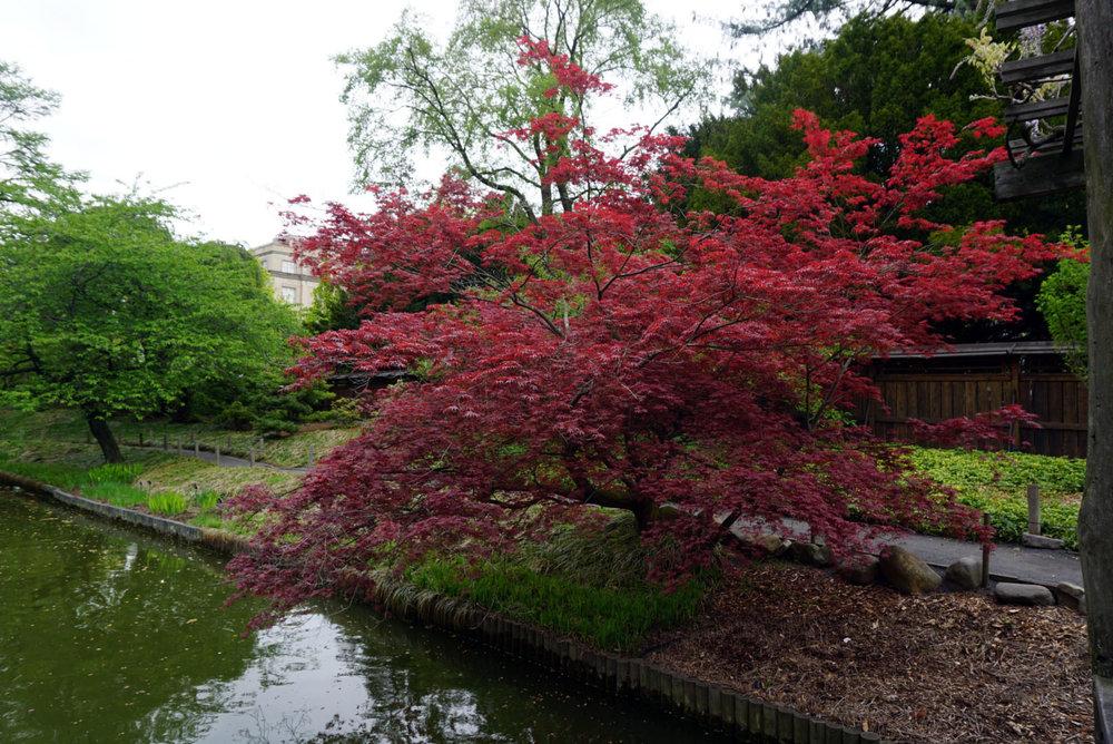 botanic gardenss 13.jpg