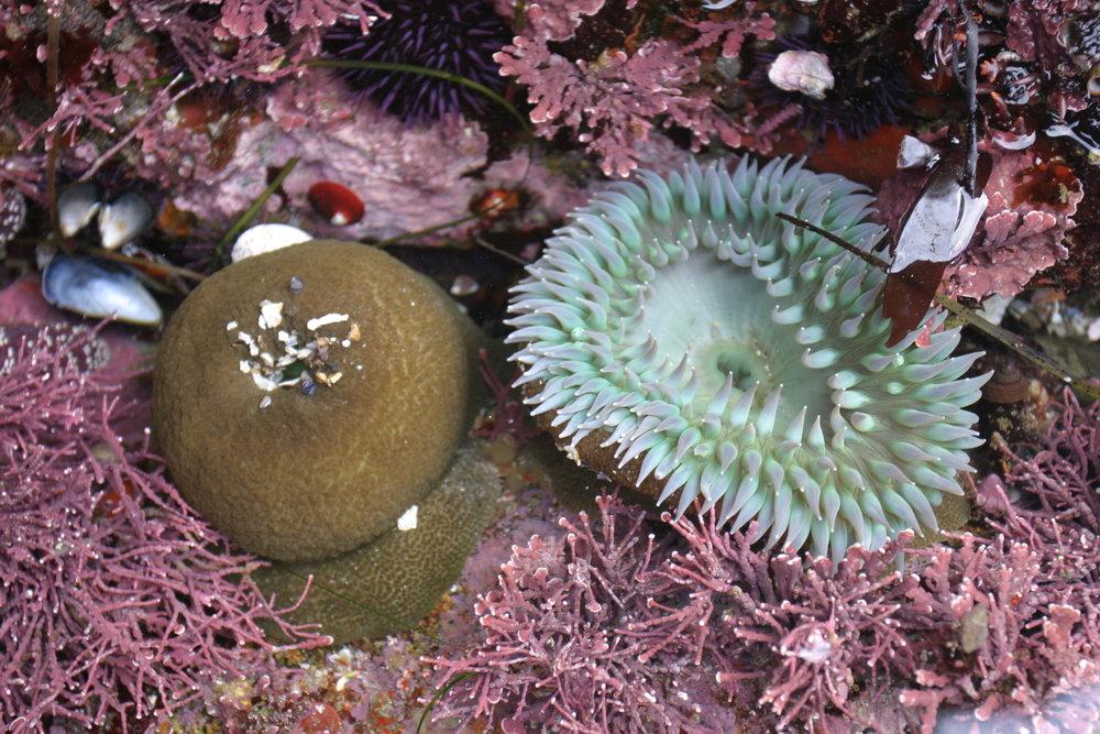 12_ Sea Anemones.JPG