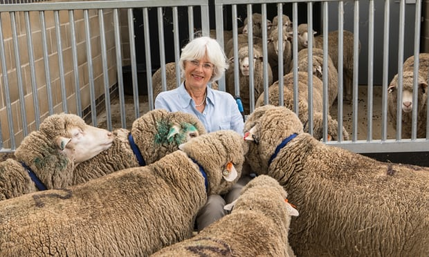 Jenny Morton, a professor of neurobiology at Cambridge University, with transgenic sheep imported from New Zealand to assist with research into Huntington's disease. Photograph: Antonio Olmos for the Observer