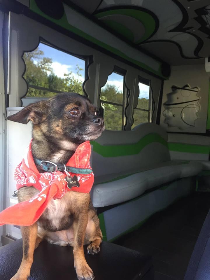lola on bus.jpg