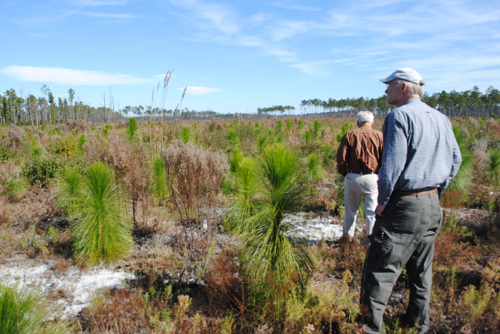 Two men standing on a land filled with small long-leaf pine plants.