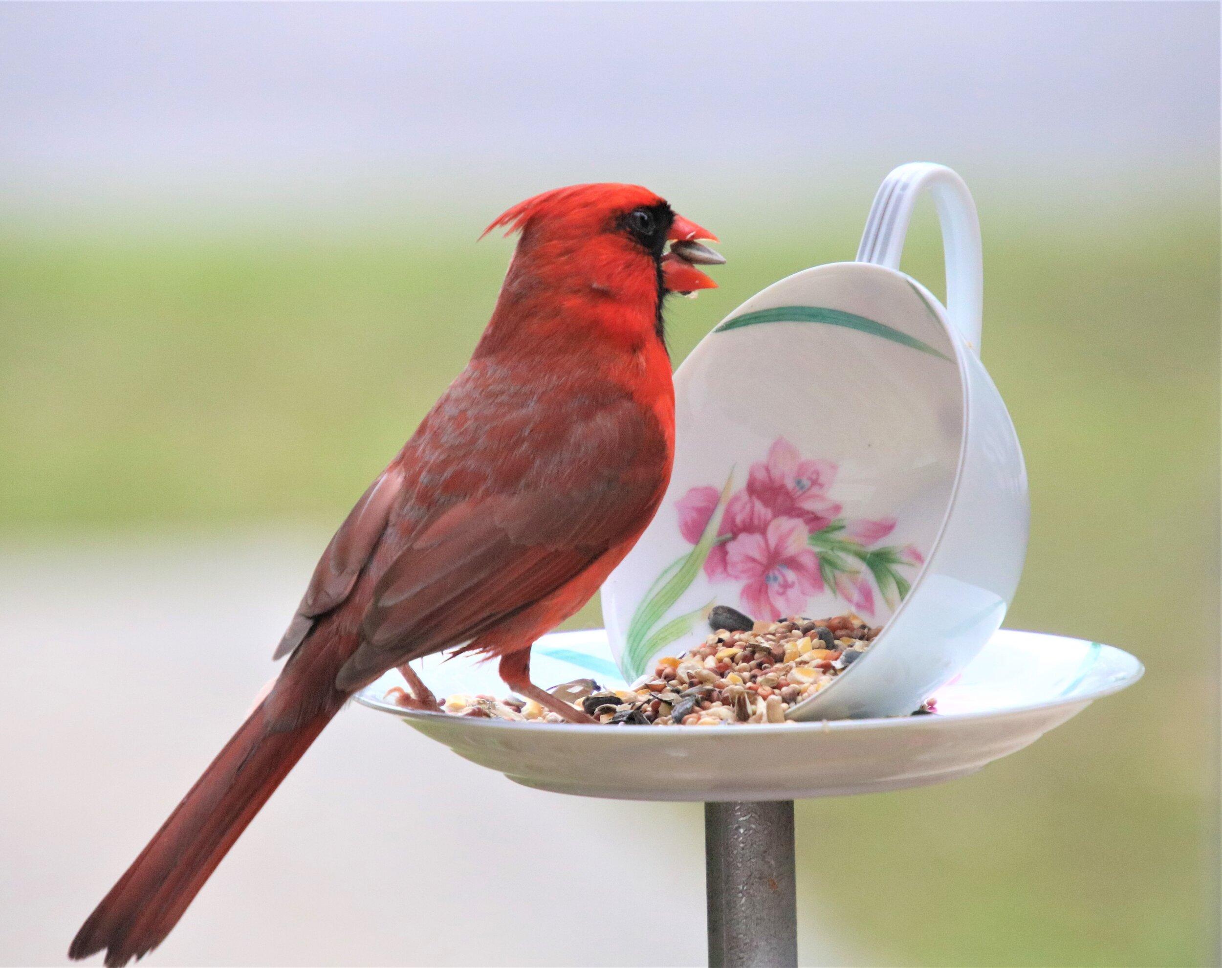 Diy Teacup Bird Feeder South Carolina Wildlife Federation