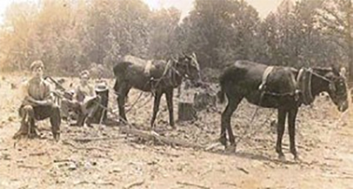 C.V. Tarter, left, and friend cleaning land after cutting timber to be saved into lumber for manufacturing wooden gates in the early 1940s.