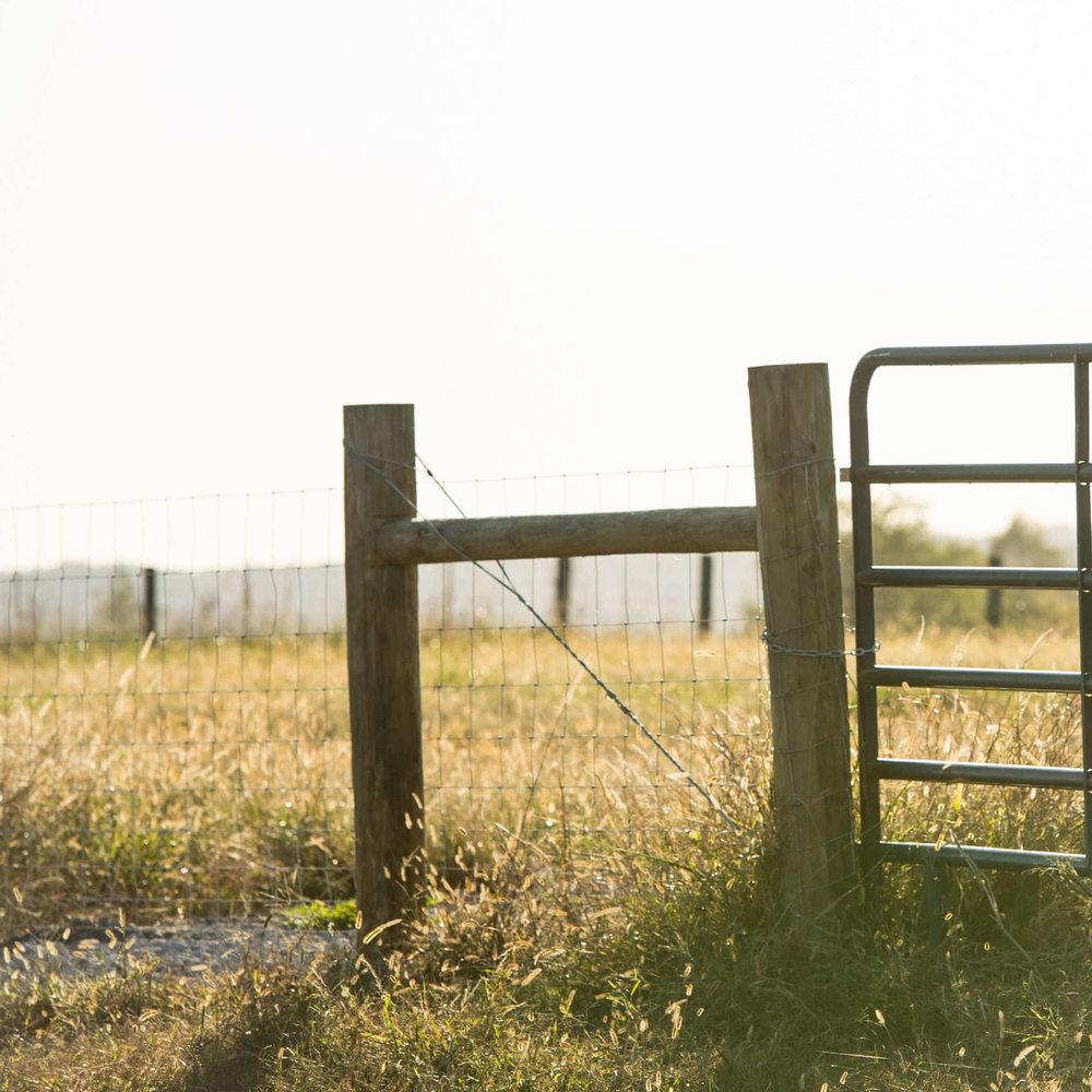 Tarter-Cow Feeders Stock Images-0030 (1).jpg