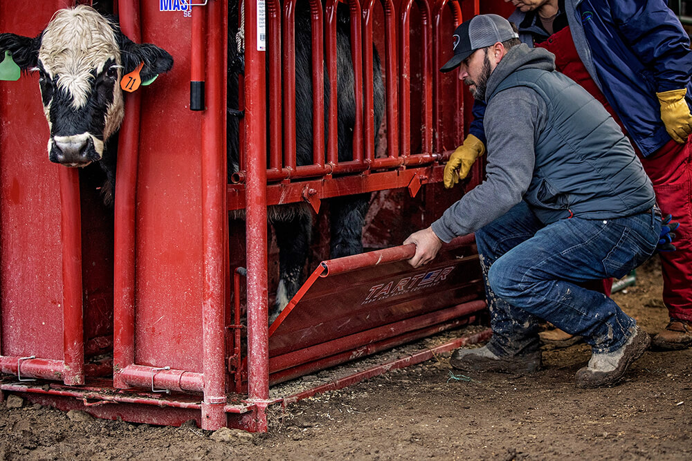 Removable bottom panel allows safe access to lower half of livestock