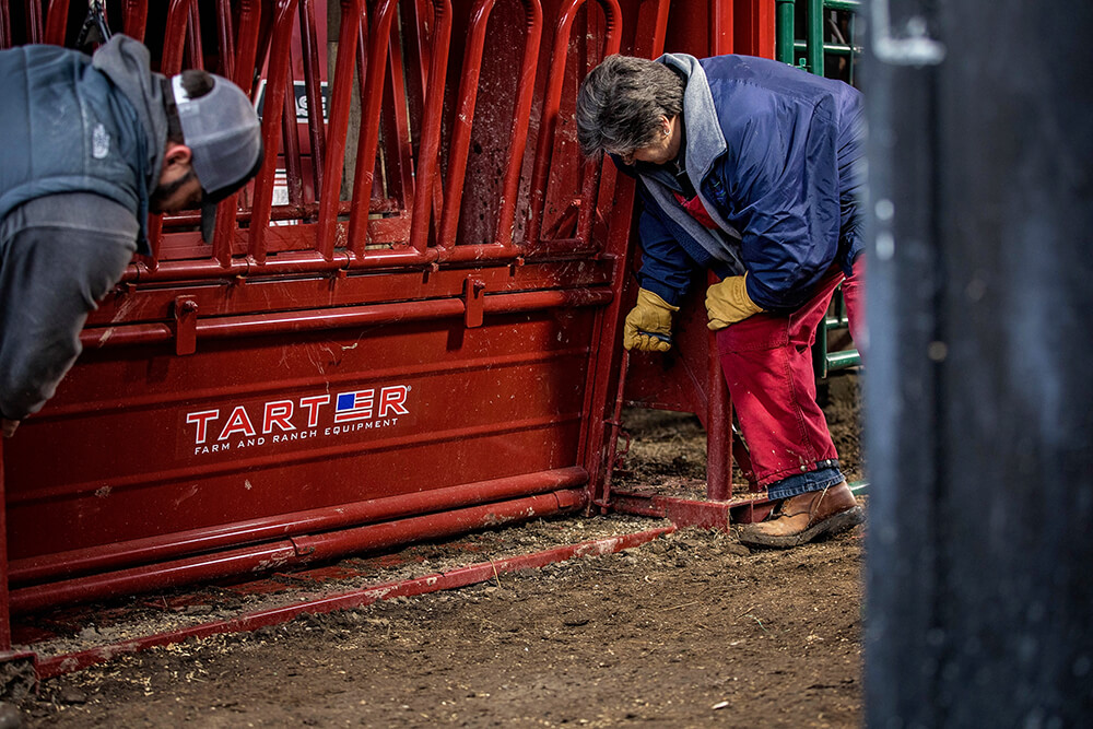 Side panels easily adjust to work with various sizes of livestock