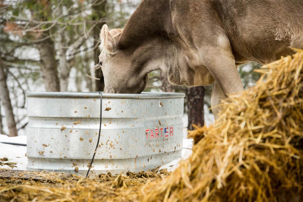 OU100 - Livestock Waterer (1).jpg