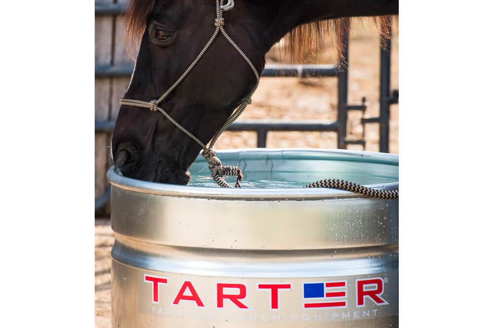 tarter-13.jpg