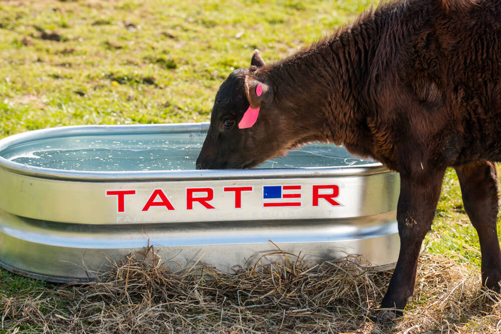 tarter-9.jpg