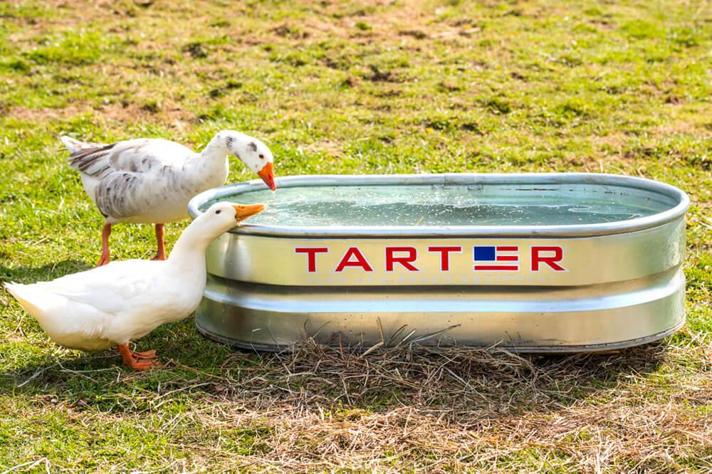 tarter-10.jpg
