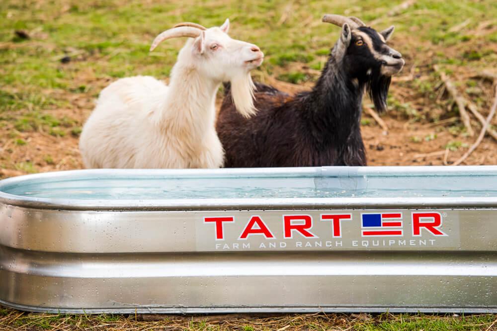 tarter-11.jpg