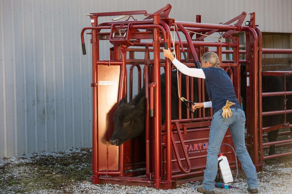 Cattle Handeling-2950-2.jpg