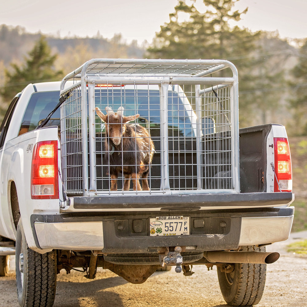 Small Animal Transporters -