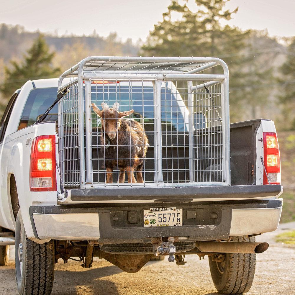 Small Animal Transporters -