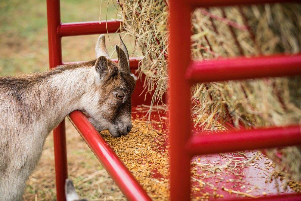 DuraTough Small Animal Feeder-2.jpg