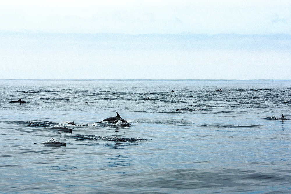DolphinPod2.jpg