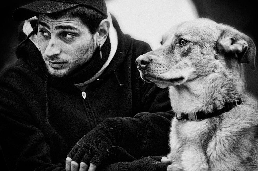 punx dog.jpg