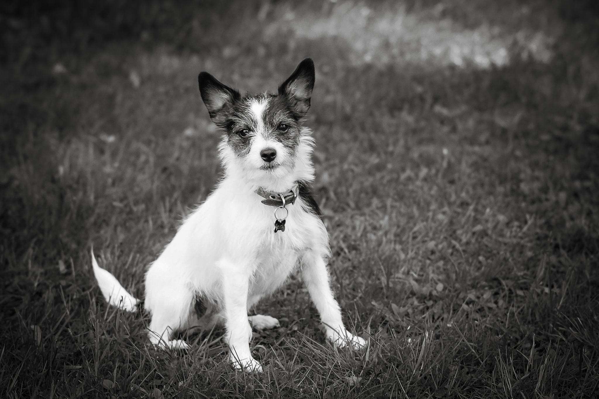 Truro Pet Photographer