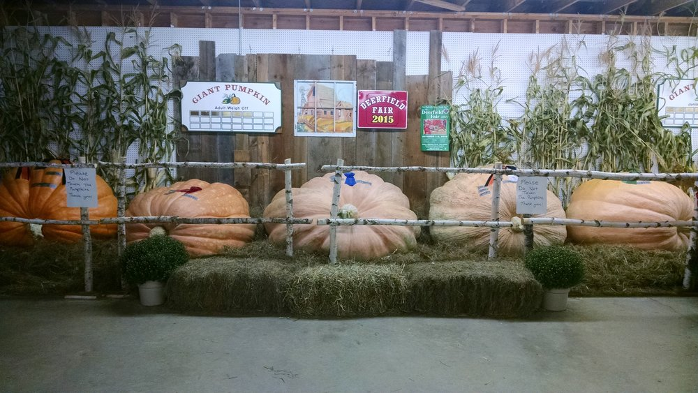 My 1185-pound pumpkin on display at the Deerfield Fair. It's the one all the way on the right.