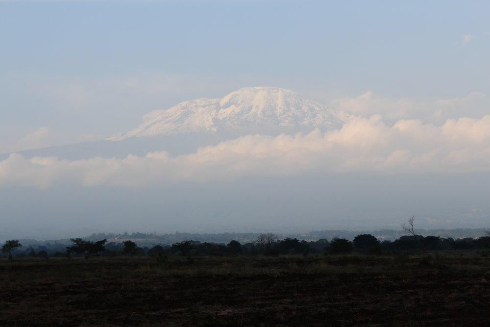 View of Kilimanjaro from the road. It is so big!