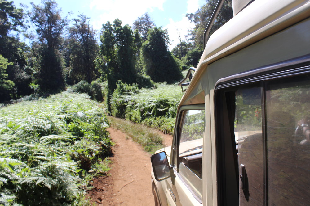 Road to the Lemosho Gate.