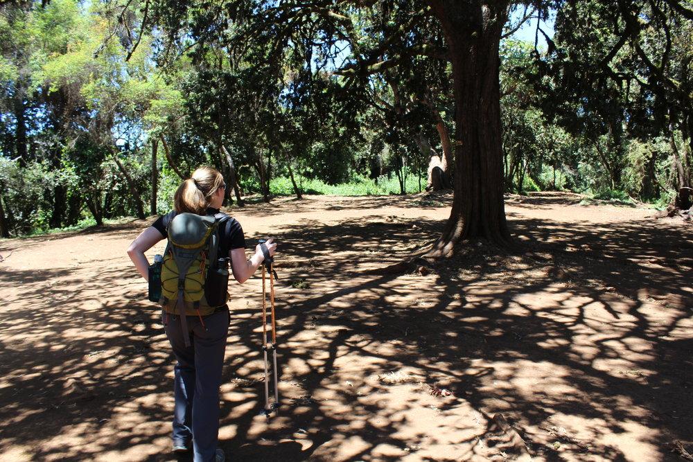 Big Tree Camp