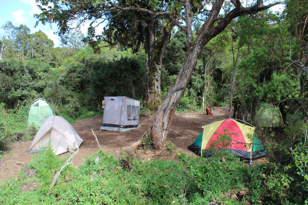 Our tents at Big Tree Camp