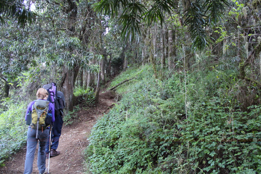 Hiking in the jungle on day 2 of the Lemosho Route