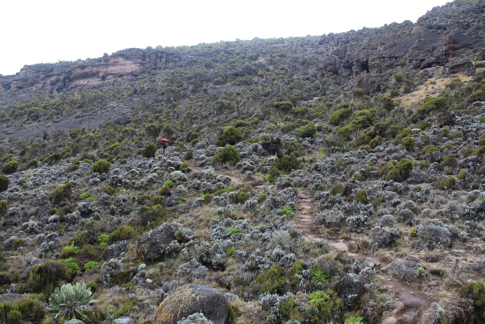 Last uphill stretch before Karanga Valley Camp