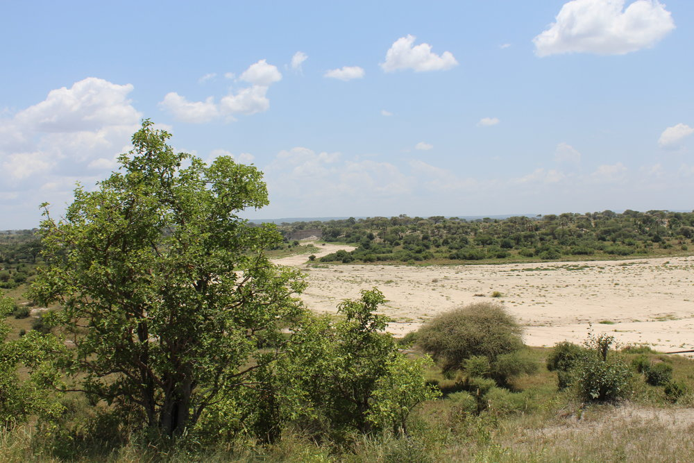 Dried riverbed at Tarangire National Park