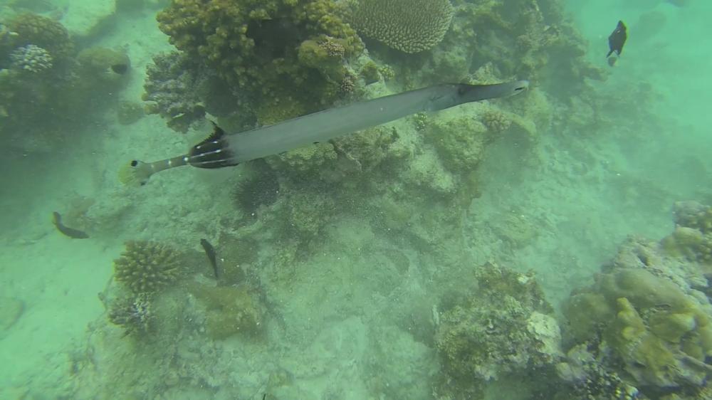 Mnemba Island Snorkeling in Zanzibar