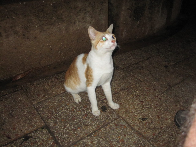 One of many feral cats begging us for food in Stone Town.