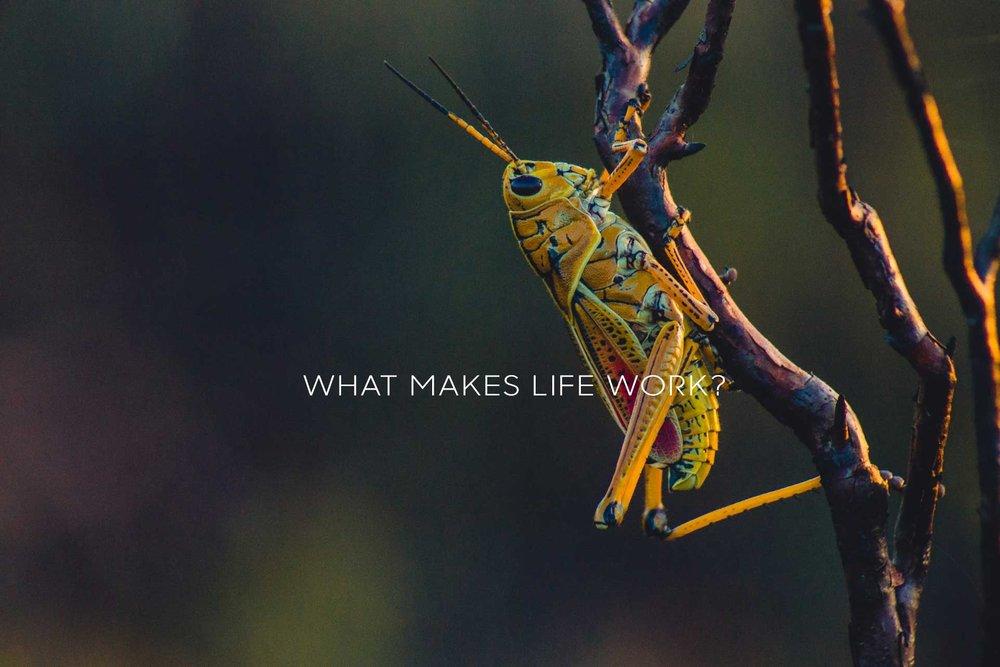 whatmakeslifework5.jpg