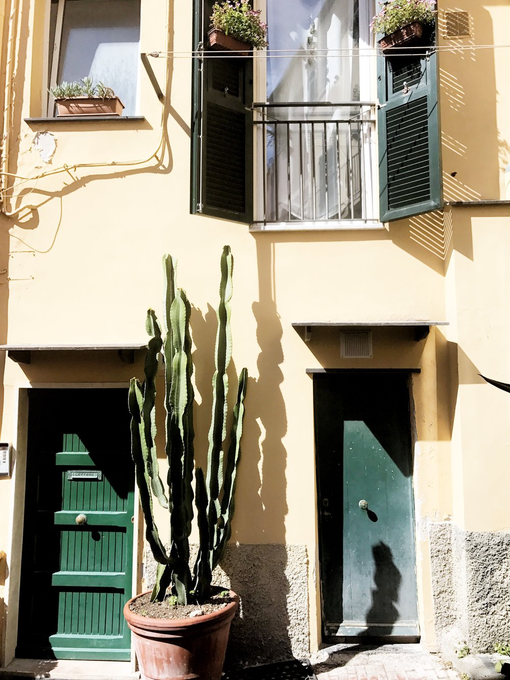 Cactus friends in Boccadasse, a neighborhood in Genova, Italy