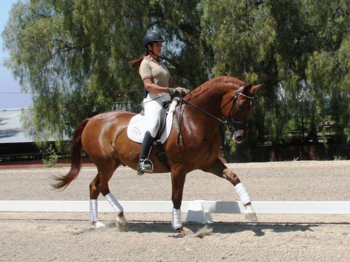 Monterey-at-Spirit-Equestrian-014-705x528.jpg