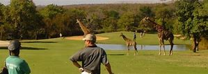 leopard creek1.jpg